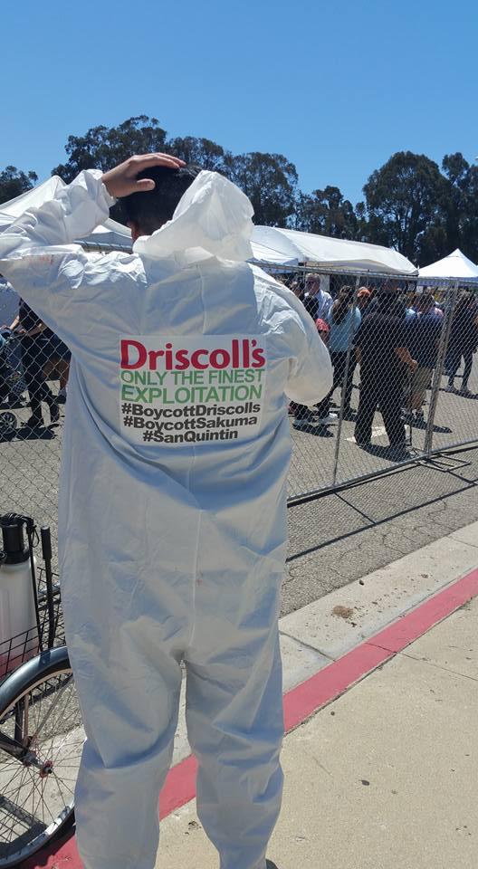Driscoolls 2